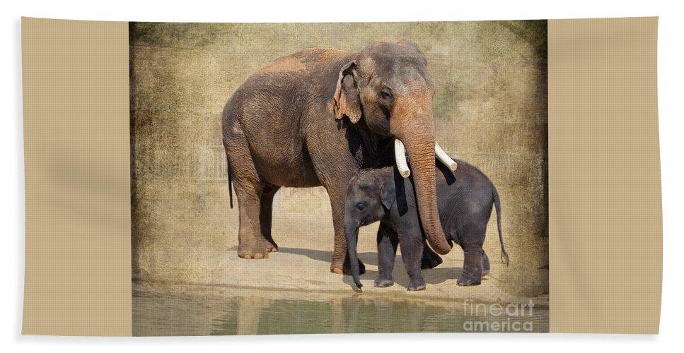 Elephant Beach Towel featuring the photograph Bonding - Asian Elephants Houston Zoo by TN Fairey