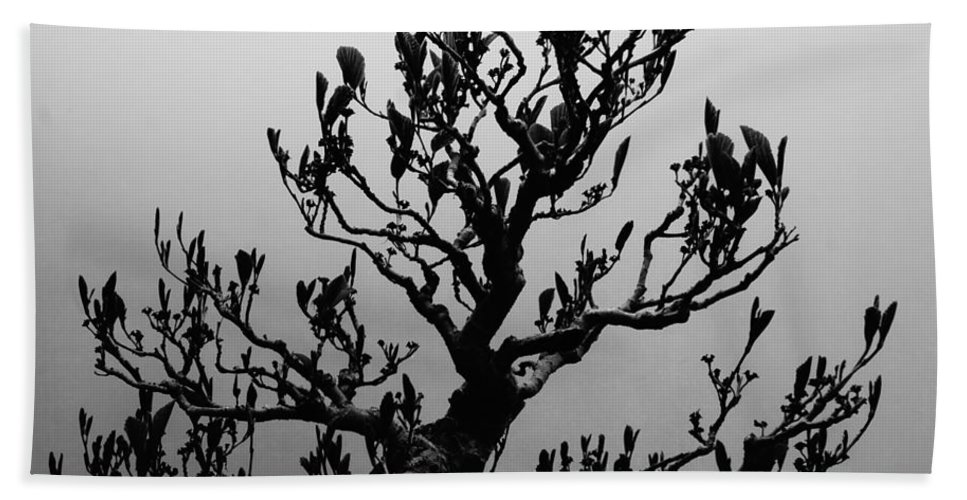 Japanese Culture Beach Towel featuring the photograph Bonsai Black And White by Tim G Ross