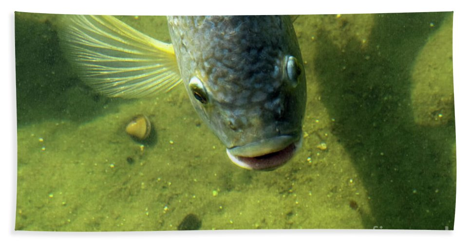 Fish Beach Towel featuring the photograph Botox by William Tasker