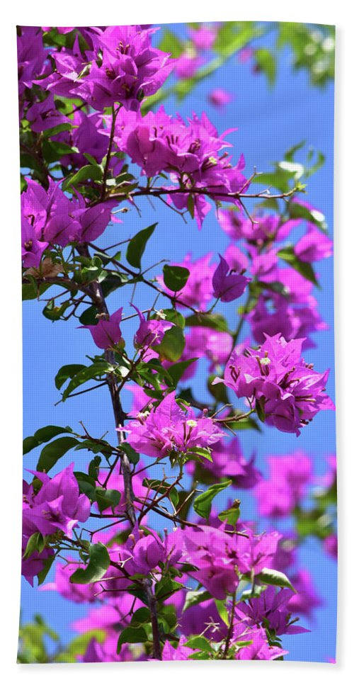 Bougainvillea Beach Towel featuring the photograph Bougainvillea And Sky by William Tasker