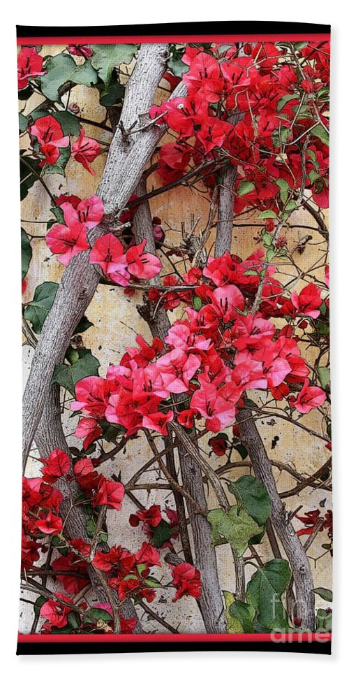 Bougainvillea Beach Towel featuring the photograph Bougainvillea On Mission Wall - Digital Painting by Carol Groenen