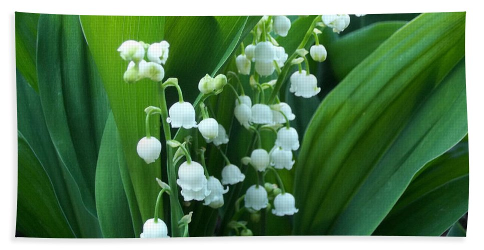 Lilly Of The Valley Beach Towel featuring the photograph Bouquet Of Happiness by Augustus Gallia