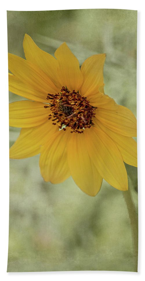 Beautiful Beach Towel featuring the photograph Bowing To The Sun by Teresa Wilson