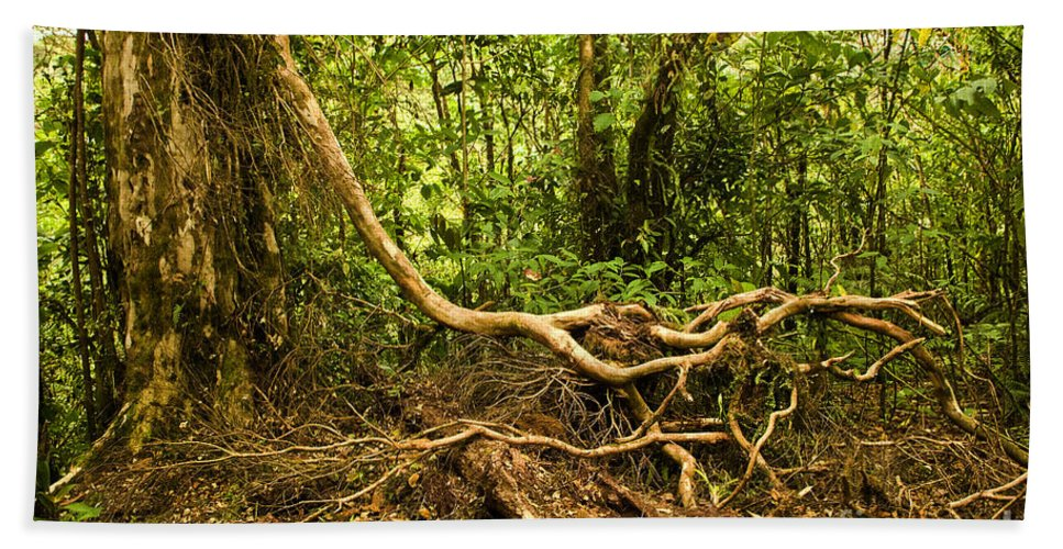 Tree Beach Towel featuring the photograph Branching Out In Costa Rica by Madeline Ellis