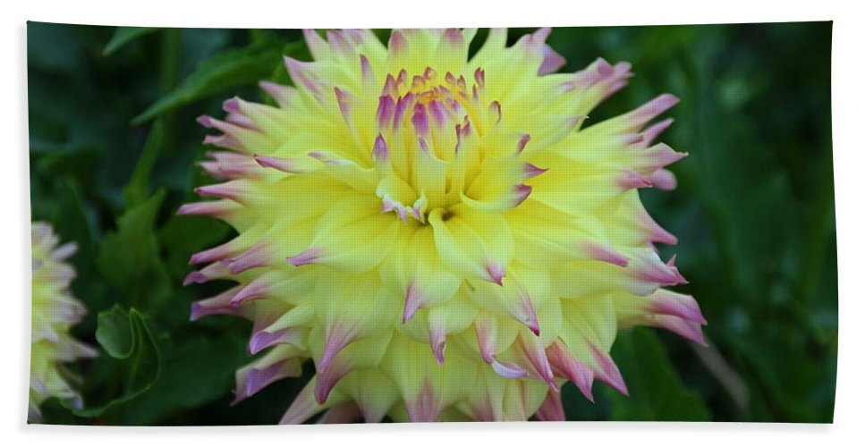 Dahlia Beach Towel featuring the photograph Brave And Crazy by Michiale Schneider