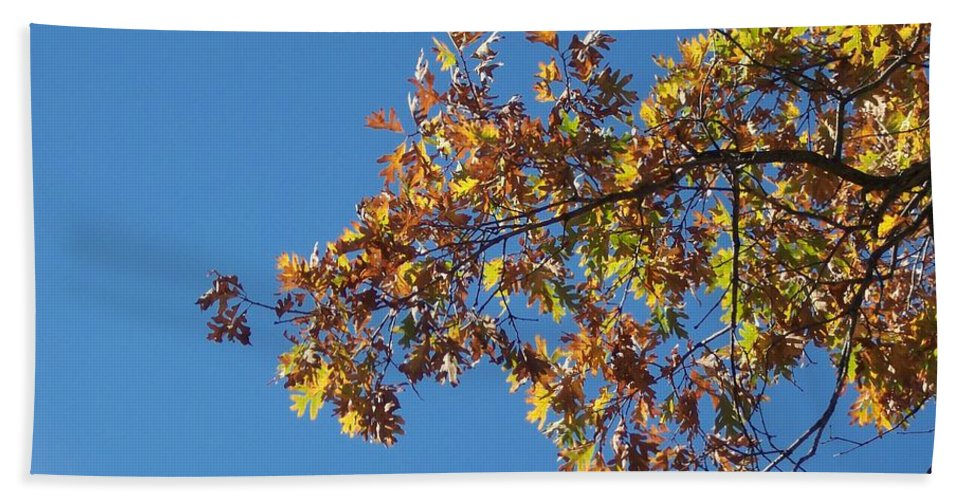 Branch Beach Towel featuring the photograph Bright Autumn Branch by Michelle Miron-Rebbe