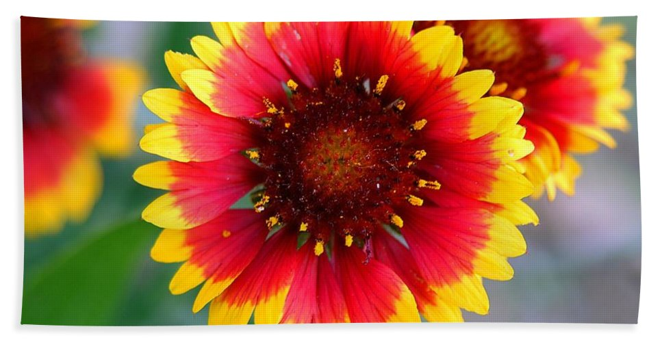 Clay Beach Towel featuring the photograph Bright Floral Day by Clayton Bruster