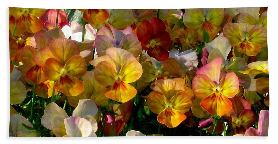 Pansy Beach Towel featuring the photograph Bright Shining Faces by Marla McFall