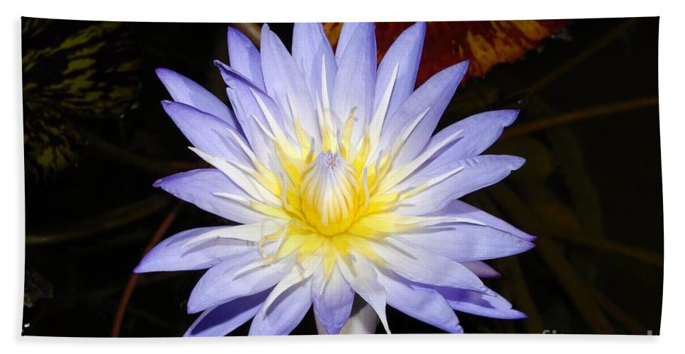 Lily Beach Towel featuring the photograph Brilliant Beauty by David Lee Thompson