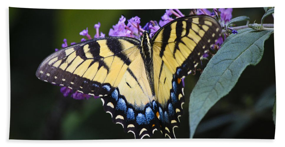 Butterfly Beach Towel featuring the photograph Brilliant Butterfly by Teresa Mucha