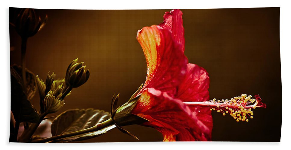 Hibiscus Beach Towel featuring the photograph Brilliant Hibiscus by Keith Allen