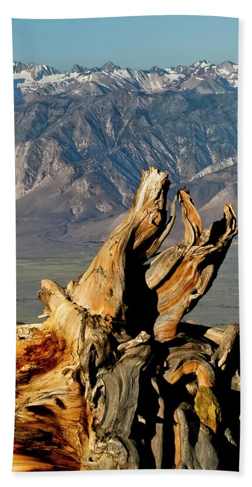 Bristlecone Pine Forest Beach Towel featuring the photograph Bristlecone Pine Down by Albert Seger