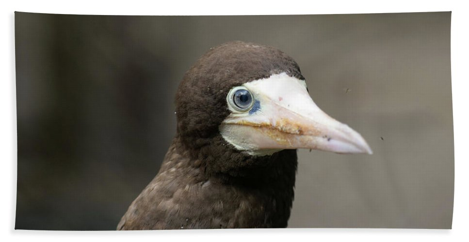 Brown Beach Towel featuring the photograph Brown Booby by William Tasker