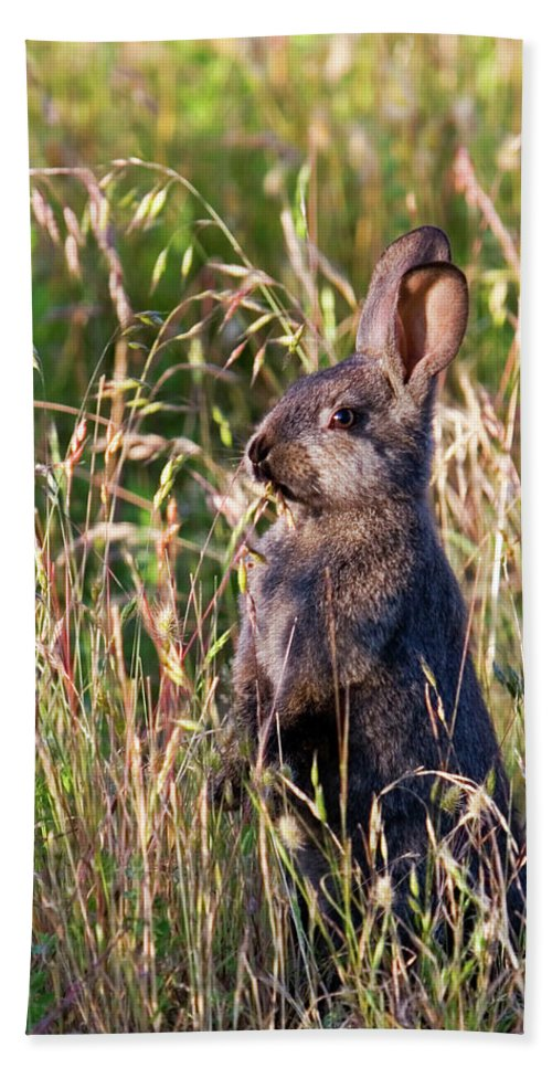 Rabbit Beach Towel featuring the photograph Brown Bunny by Randall Ingalls