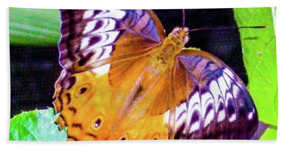 Butterfly Beach Towel featuring the photograph Brown Butterfly by Louie Navoni