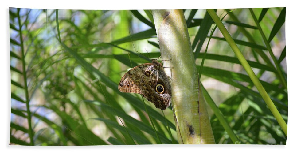 Blue Morpho Beach Towel featuring the photograph Brown Morpho Butterfly Resting On A Sunny Tree by DejaVu Designs