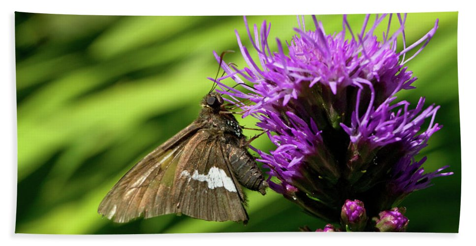 Flower Beach Towel featuring the photograph Brown Moth On Pink by Randall Ingalls