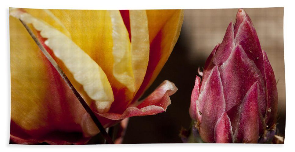 Cactus Beach Towel featuring the photograph Bud To Blossom by Kelley King