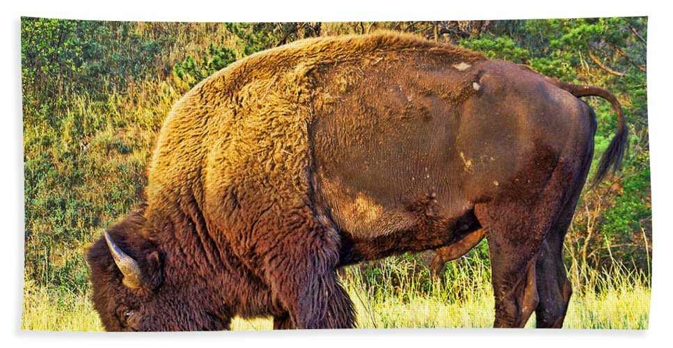 Custer State Park Beach Towel featuring the photograph Buffalo Custer State Park by Tommy Anderson