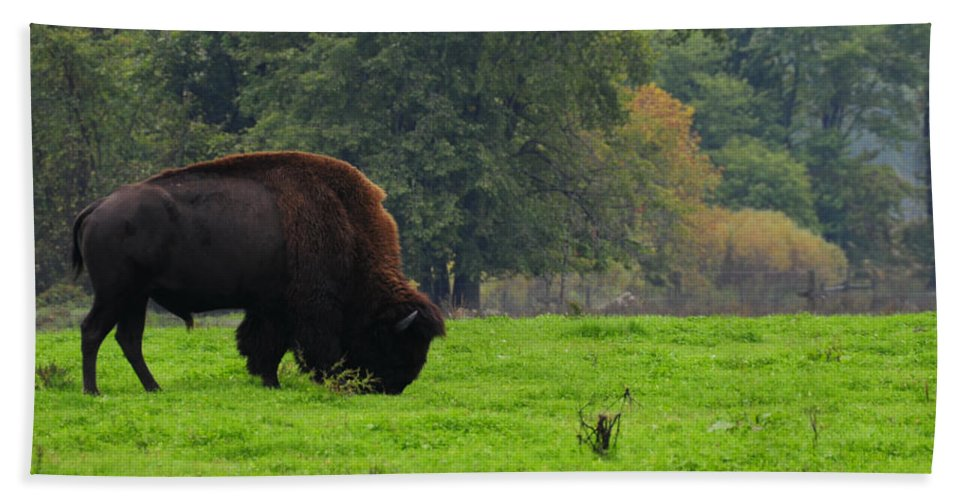 Buffalo Beach Towel featuring the photograph Buffalo In Spring Grass by David Arment