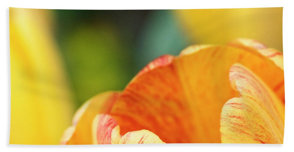 Tulip Beach Towel featuring the photograph Bug View Of Tulip by Marilyn Hunt