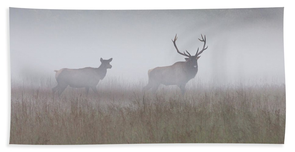 Elk Beach Towel featuring the photograph Bull And Cow Elk In Fog - September 30 2016 by D K Wall