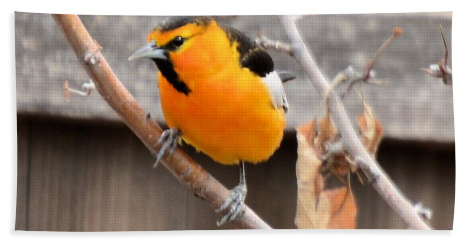 Bird Beach Towel featuring the photograph Bullock's Oriole by Wendy Fox