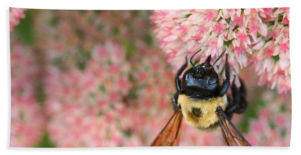 Bee Beach Towel featuring the photograph Bumble Bee by Angela Rath