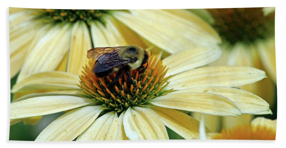 Flowers Beach Towel featuring the photograph Bumble Bee At Work by Steve Gass