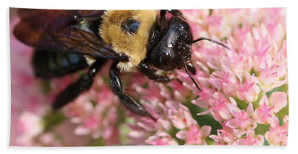 Bee Beach Towel featuring the photograph Bumble Bee Macro by Angela Rath