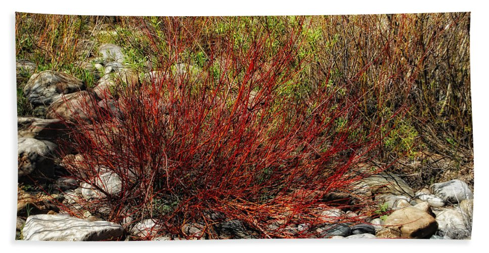 Willow Bush Beach Towel featuring the photograph Burning Bush by Donna Blackhall