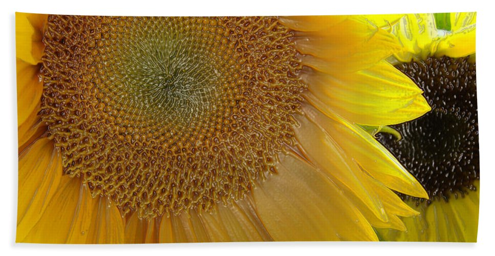 Sunshine Beach Towel featuring the photograph Burst Of Sunshine by Terry Anderson