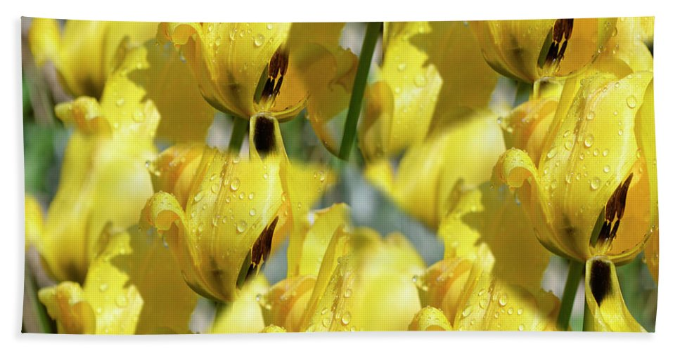 Yellow Beach Towel featuring the photograph Burst Of Yellow by Traci Cottingham