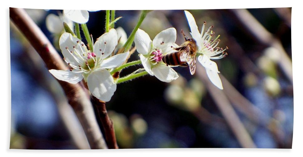 Pear Beach Towel featuring the photograph Busy Bee by Betty Northcutt