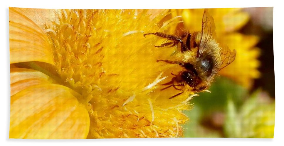 Bumble Bee Beach Towel featuring the photograph Busy Bee by Matthew Wilson