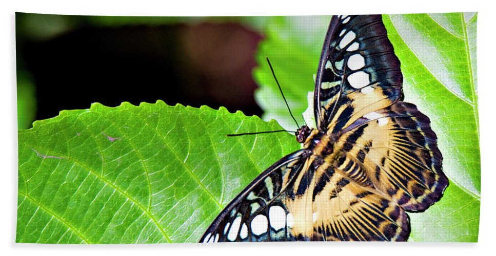 Butterfly Beach Towel featuring the photograph Butterfly 13a by Walter Herrit