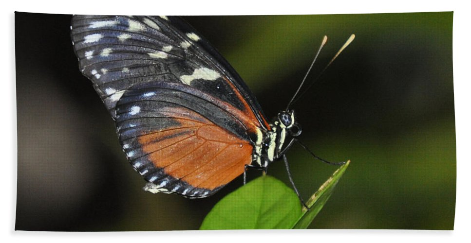Butterfly Beach Towel featuring the photograph Butterfly 2 by Rich Bodane