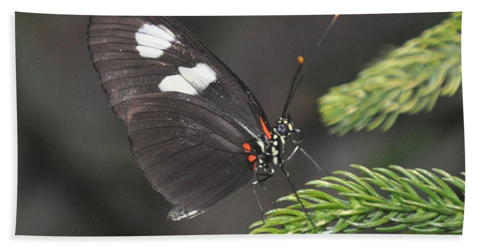 Butterfly Beach Towel featuring the photograph Butterfly 5 by Rich Bodane