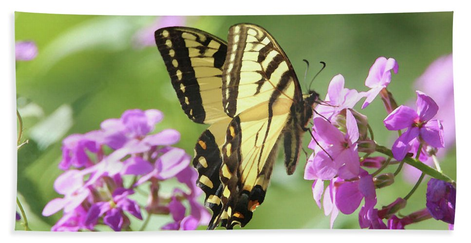 Butterfly Beach Towel featuring the digital art Butterfly #9 by David Stasiak