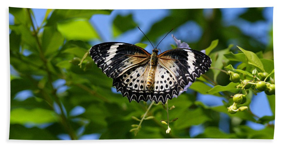 Butterfly Beach Towel featuring the photograph Butterfly And Blue Sky by Sandy Keeton