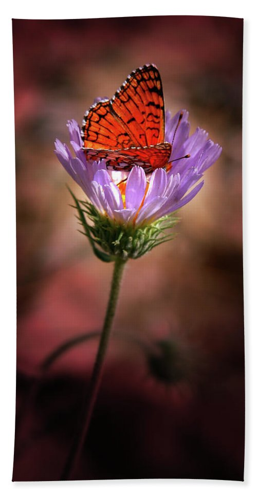 Butterfly Beach Towel featuring the photograph Butterfly by Chris Brannen