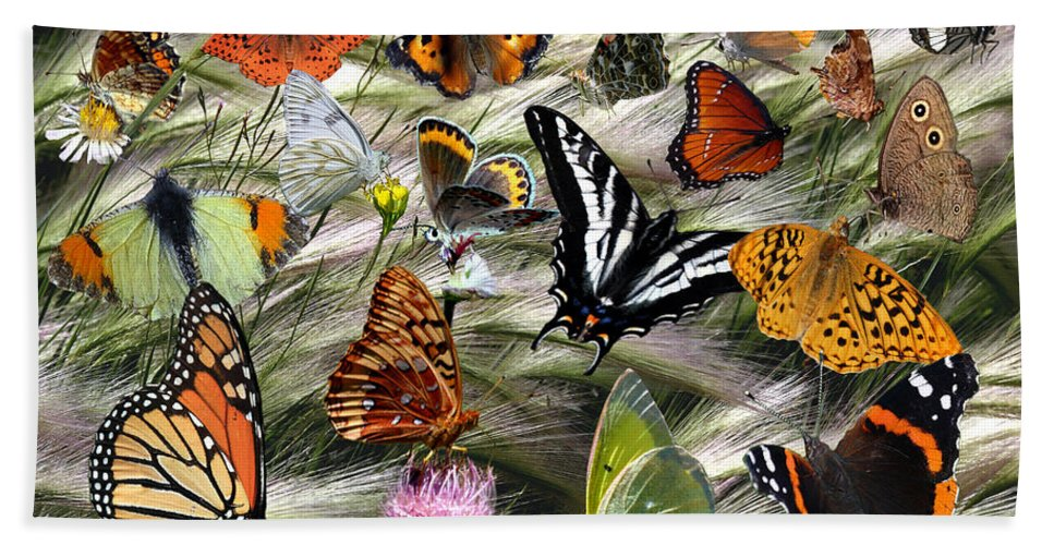 Nature Beach Towel featuring the photograph Butterfly Collage by David Salter