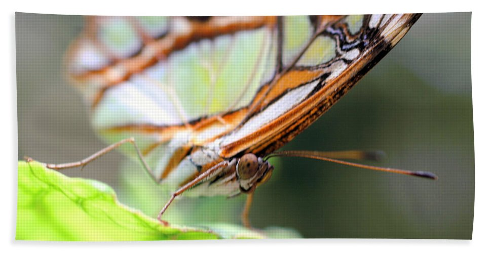 Butterfly Beach Towel featuring the photograph Butterfly Face by Smilin Eyes Treasures
