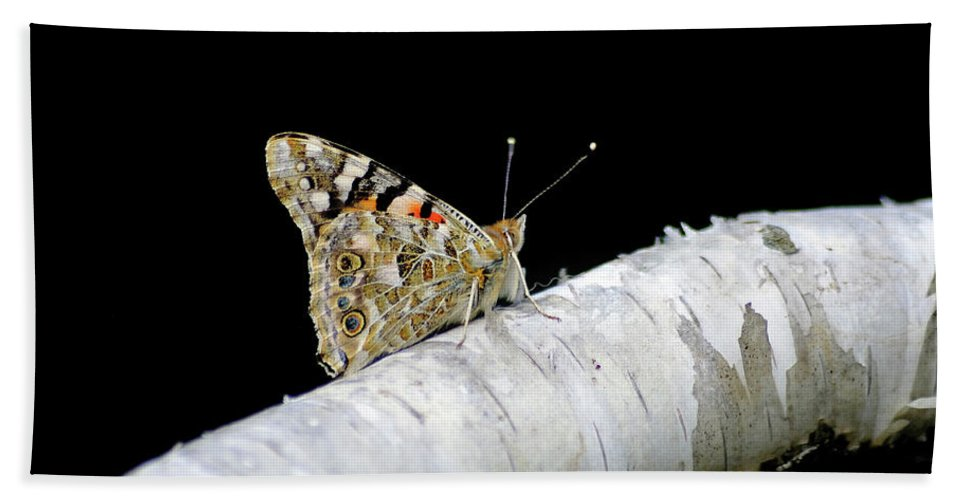 Farfalla Beach Towel featuring the photograph Butterfly by Ilaria Andreucci