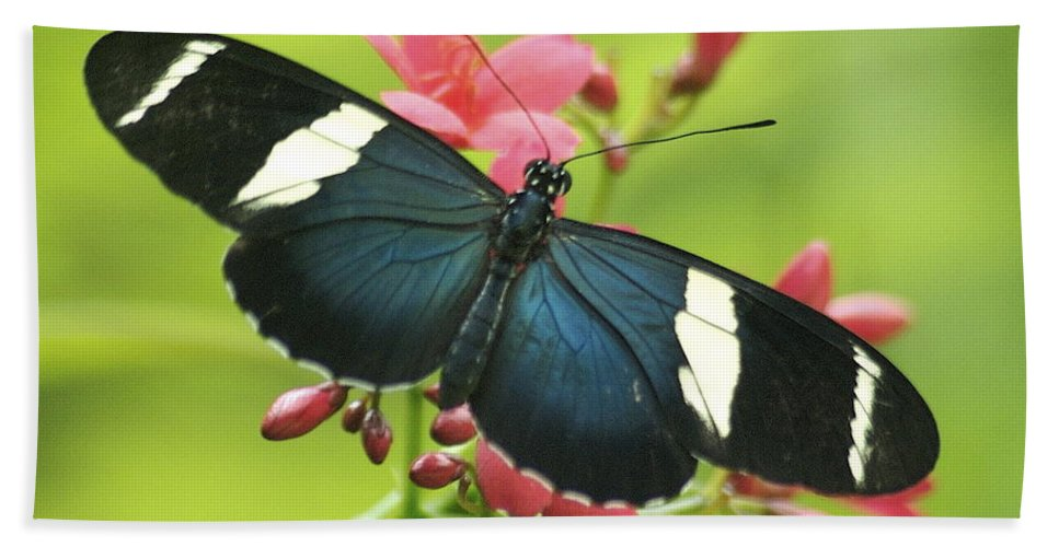 Butterfly Beach Towel featuring the photograph butterfly in Square by Michael Peychich