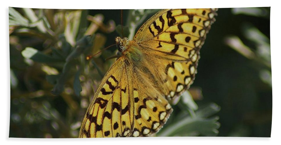 Butterfly Beach Towel featuring the photograph Butterfly by Jeff Swan
