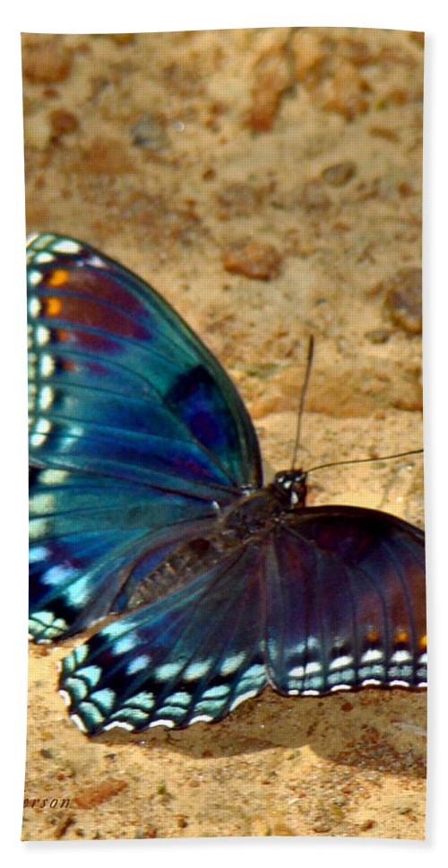Red Spotted Purple Beach Towel featuring the photograph Butterfly Landing by Terry Anderson