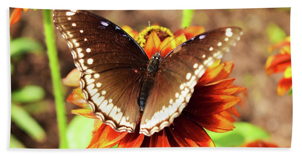 Flower Beach Towel featuring the photograph Butterfly On A Sunset by Sydney Thompson