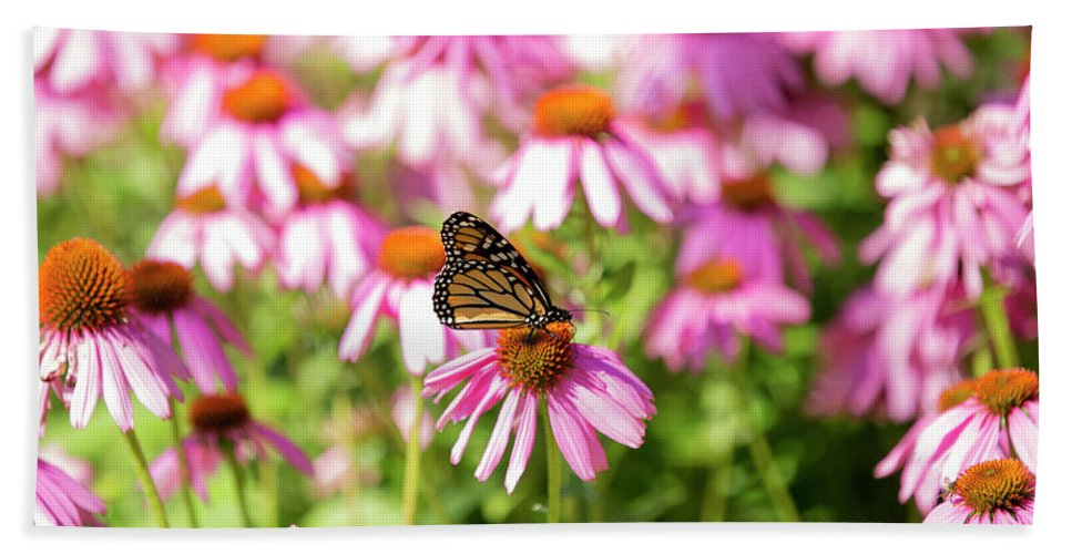 Butterfly Beach Towel featuring the photograph Butterfly On Flowers by David Stasiak