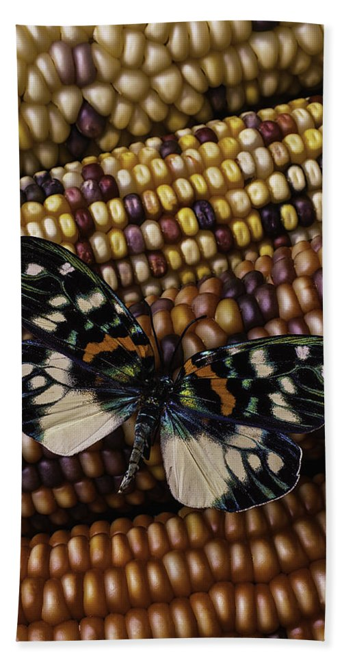 Indian Beach Towel featuring the photograph Butterfly On Indian Corn by Garry Gay